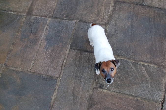 Small Dog  (harry)